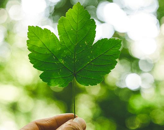 Diamo una mano all'ambiente