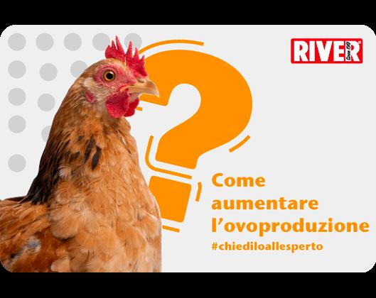 Ovoproduzione delle galline
