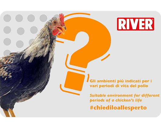 Ambienti indicati diversi periodi di vita di un pollo