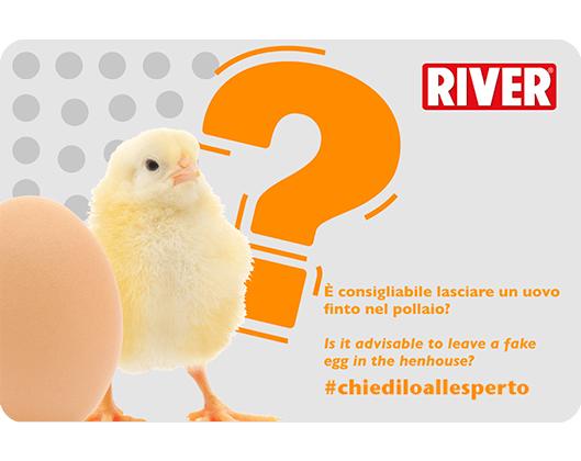 Uovo finto nel pollaio